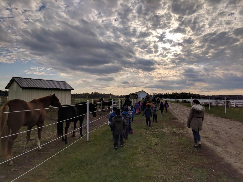Visite des chevaux au champ