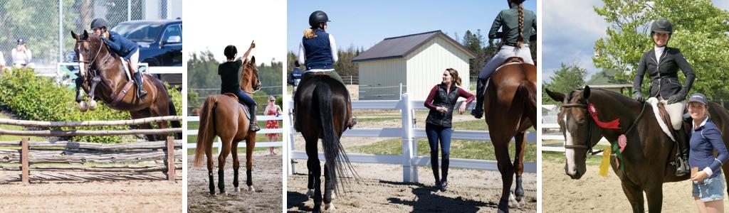 Forfaits d'entrainement de chevaux